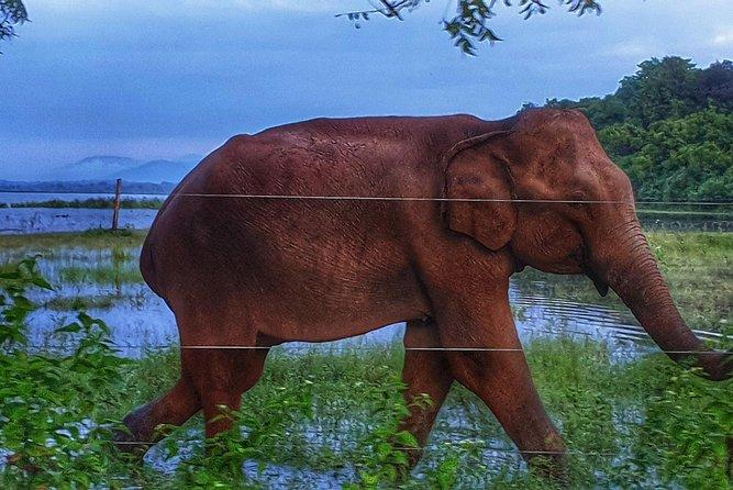 Udawalawe National Park Best Private Safari
