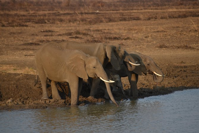 5 Days Safari- Mikumi, Ruaha National Park And Udzungwa National Park.