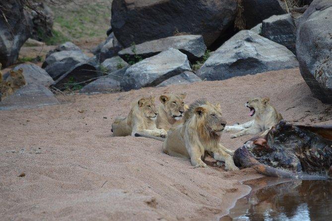 2 Days Safari Ruaha National Park