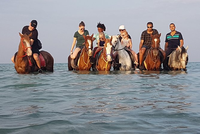 Horse Riding 3 Hours (Beach, Desert, Swimming By horse ) - Hurghada