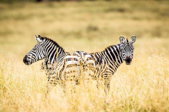 3 Days 2 Nights Budget Safari To Maasai Mara National Park