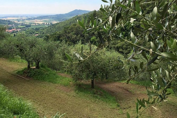 From Padua Olive Oil & Wine in the Euganean Hills
