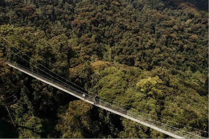 1 Day Canopy Walk Adventure in Nyungwe Forest National Park