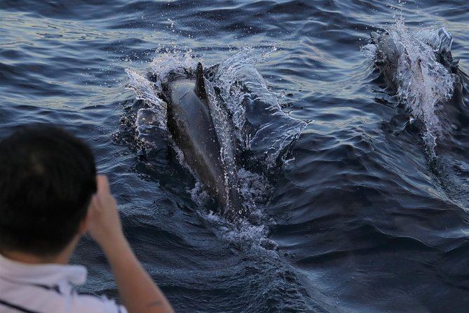 Dolphin & Whale Watching Sunset Cruise