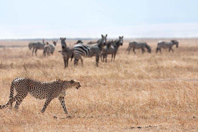 3 Day Maasai Mara Air Package with Limited Slots