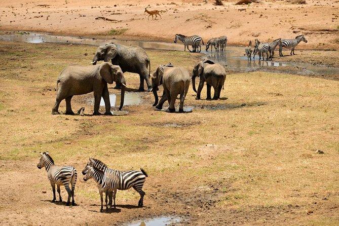 Safari (Including Serengeti) & Zanzibar Extension 11Days