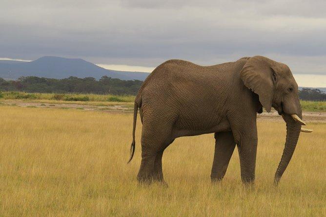 5 days 4 nights wildlife lodge Safari
