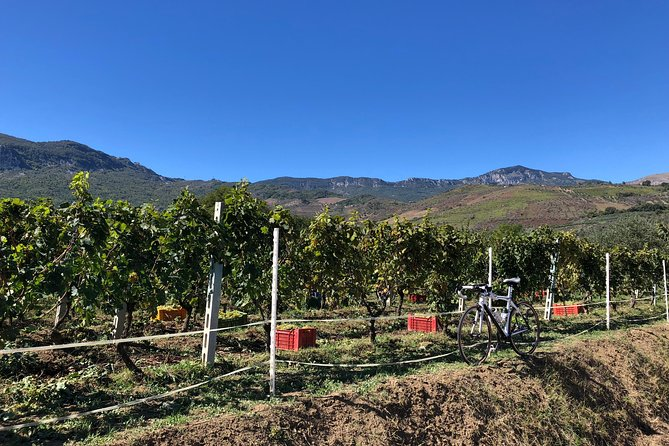 """""""Abruzzo Divino"""" Vineyards, Culture and Wines: SELF-GUIDED cycling weekend"""
