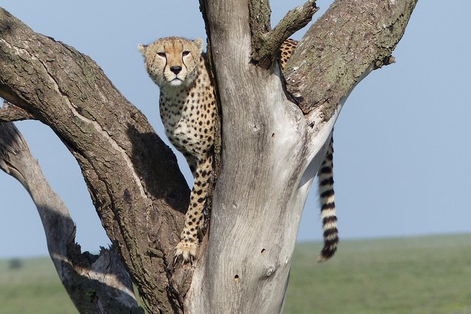 Safari and climbing