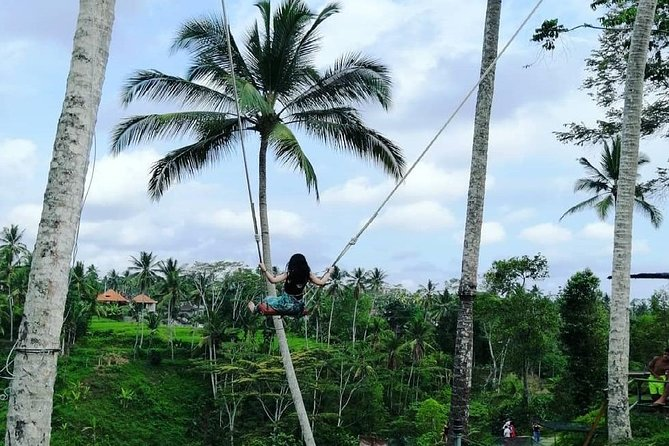 Ubud Monkey Forest Tour with Jungle Swing Tegalalang