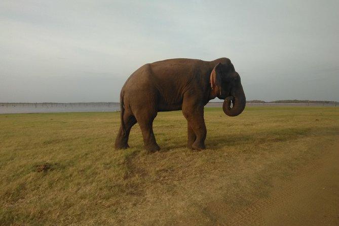 All inclusive private Safari at Yala National Park