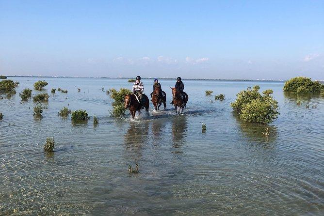 Mangroves ride