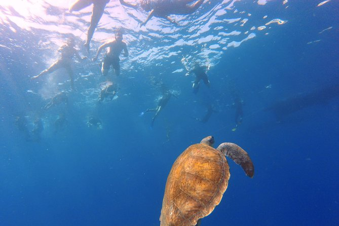 Snorkeling tour in the turtle area. (boat trip included) photo 1