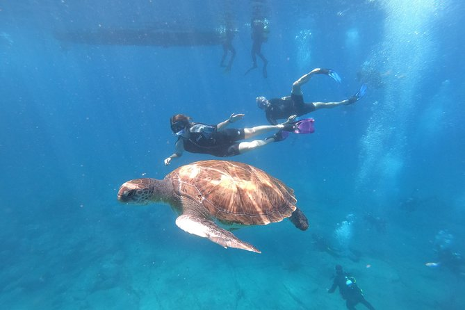 Snorkeling tour in the turtle area. (boat trip included) photo 2