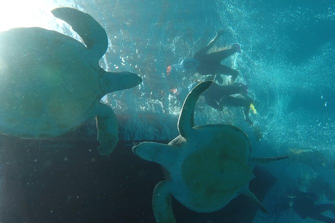 Snorkeling tour in the turtle area. (boat trip included) photo 4