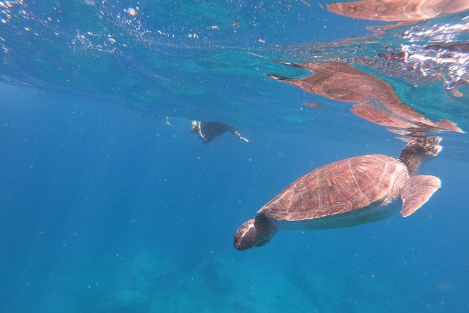 Snorkeling tour in the turtle area. (boat trip included) photo 7