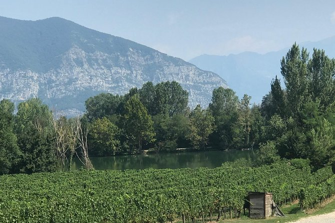 Half day wine tour from Milan: semi-private sparkling wine tour to Franciacorta