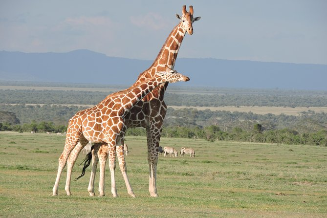 Wildlife safaris and mountain climbing photo 2