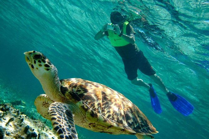 Live a UNIQUE experience in COZUMEL SNORKEL PLUS at the Caribbean Sea photo 13
