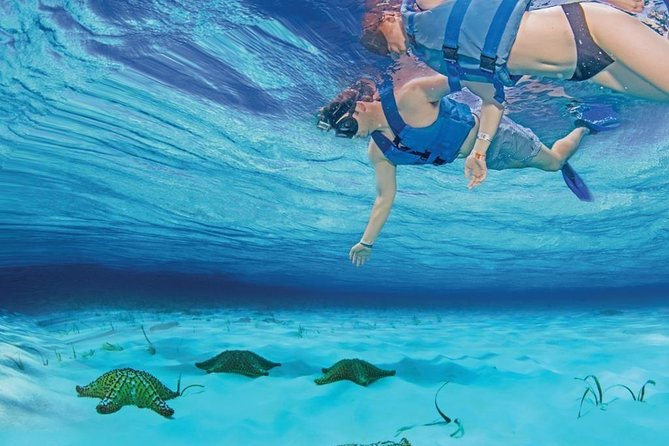 Live a UNIQUE experience in COZUMEL SNORKEL PLUS at the Caribbean Sea photo 20