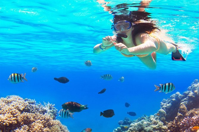 Live a UNIQUE experience in COZUMEL SNORKEL PLUS at the Caribbean Sea photo 6