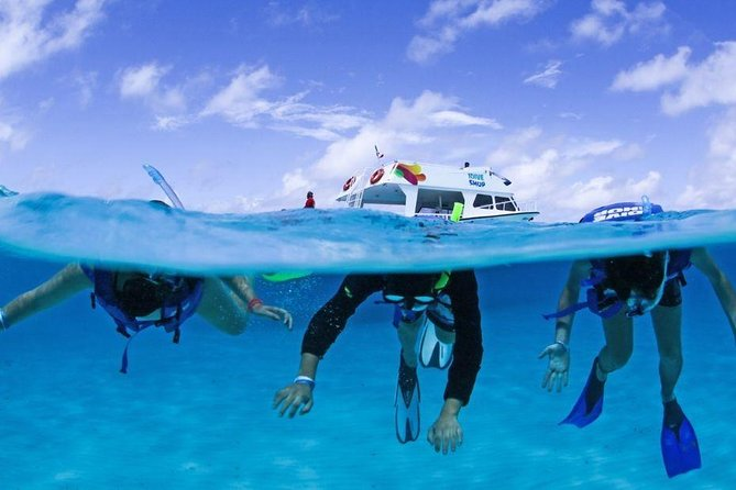 Live a UNIQUE experience in COZUMEL SNORKEL PLUS at the Caribbean Sea photo 17