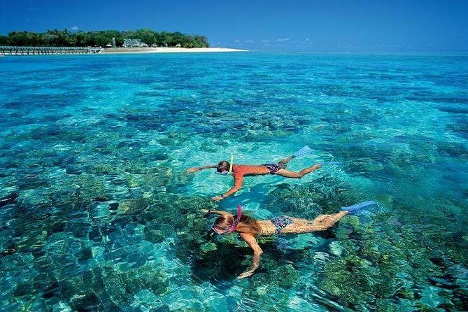 Live a UNIQUE experience in COZUMEL SNORKEL PLUS at the Caribbean Sea photo 7