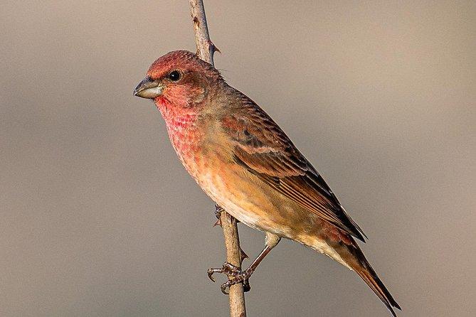 Munsiari Birding tour