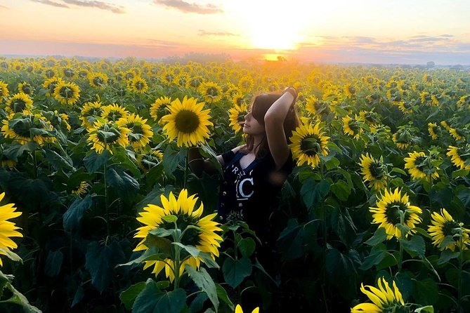 Holambra Sightseeing Tour with Visitation to the Fields of Flowers and Sunflowers