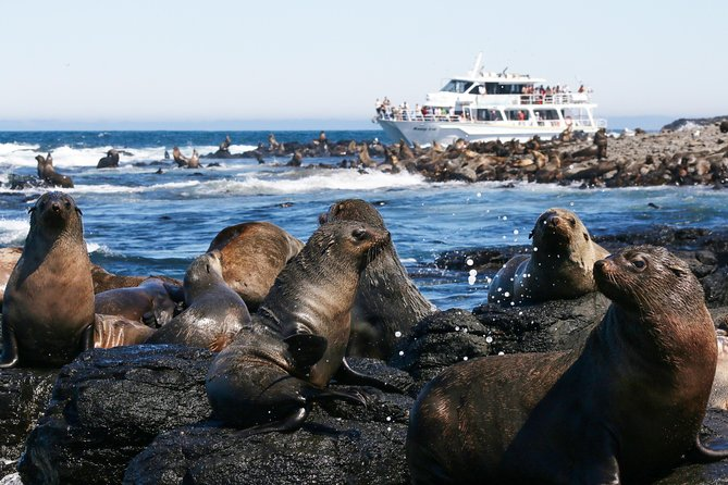 Phillip Island Seal-Watching Cruise