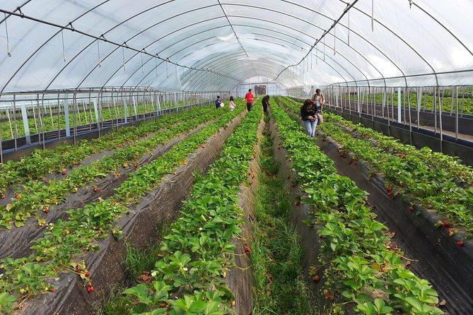 [One Group Private Tour] Organic Strawberry Farm & Nami Island & Petite France