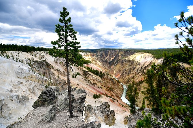 PRIVATE TOUR: The Best of Yellowstone National Park. Picnic lunch included! photo 10