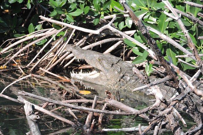 Crocodile Adventure Boat Tour in Cancun