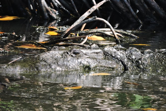 Cancun Hotel Zone Crocodile morning expedition Tour
