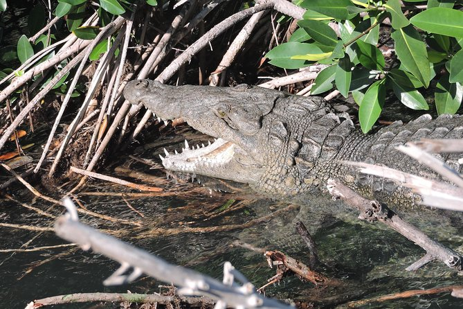 Crocodile Adventure Private Boat Tour in Cancun