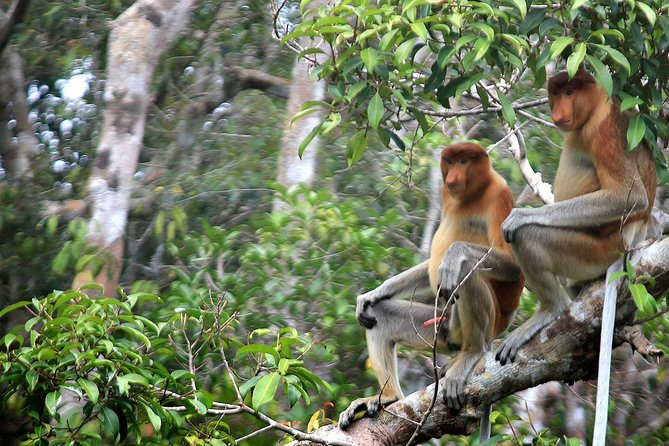 4-Day Private Orangutan and Bornean Primates Tour from Pangkalanbuun photo 6