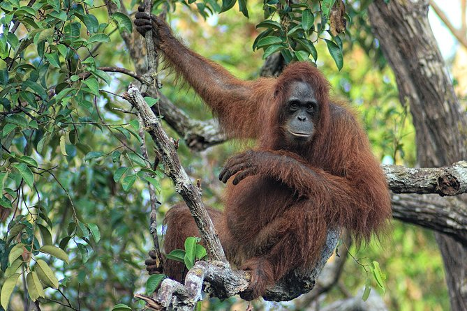 4-Day Private Orangutan and Bornean Primates Tour from Pangkalanbuun photo 3