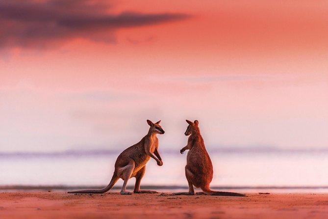 Kangaroos on the Beach at Sunrise & Freshwater Waterfall Tour