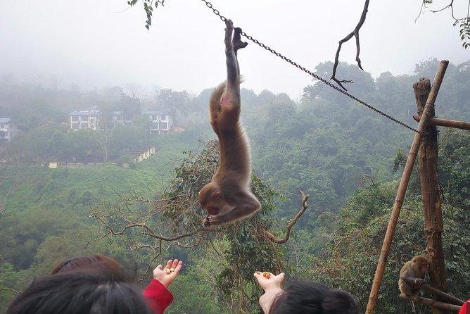 Hike the monkey hill