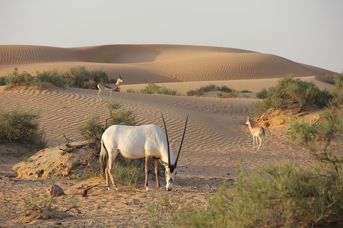 Wildlife Desert Safari Tour | Dubai