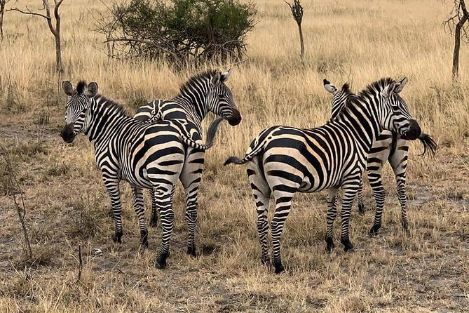 Full-Day Tour of Akagera National park From Kigali, Day Trip with Guide