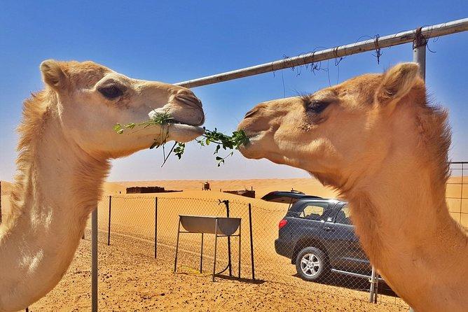 German-speaking Safari Oman