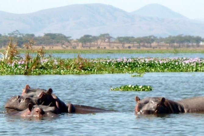 1 Day Tour Lake Naivasha And Hell's Gate From Nairobi Daily Trips