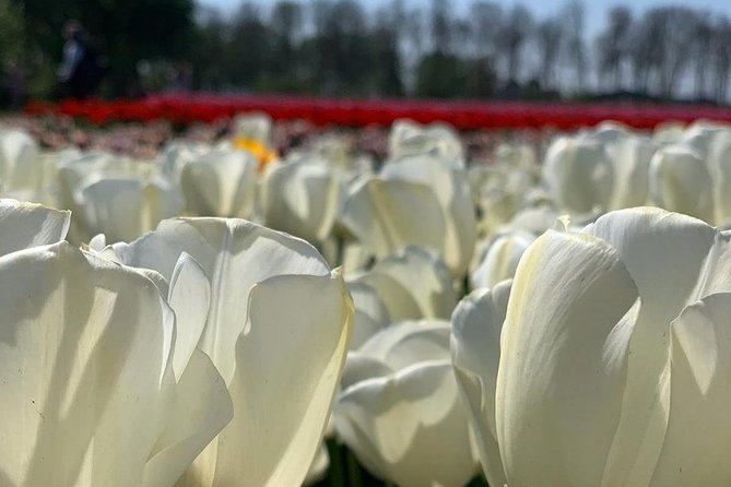 LXRY Private (Guided) Tour Keukenhof (4hrs) photo 6