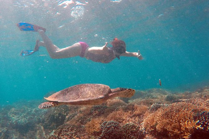 Gili Island Snorkeling Private Day Trip