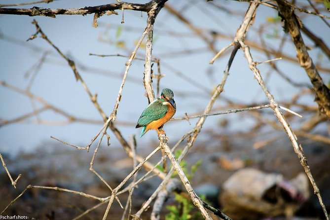 Birdwatching and Nature Walk of South Goa