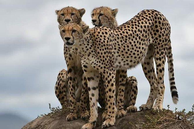7 Days safari Explore the animals and cultural tour