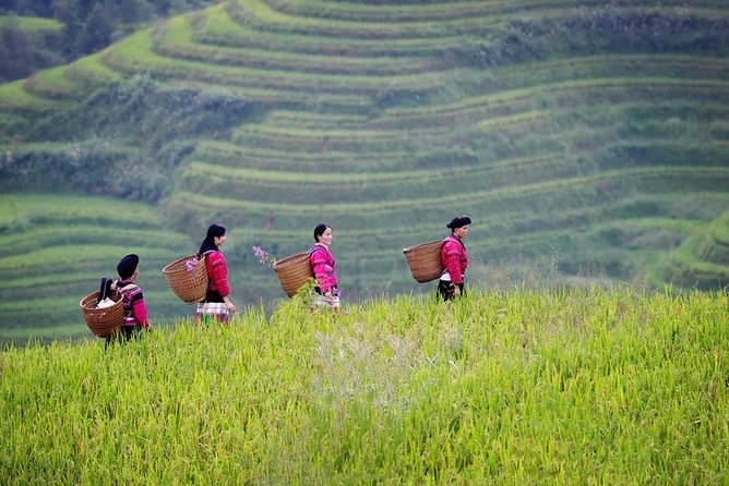 Guilin Private Day Tour to Longji Rice Terraces and Yao Minority Village