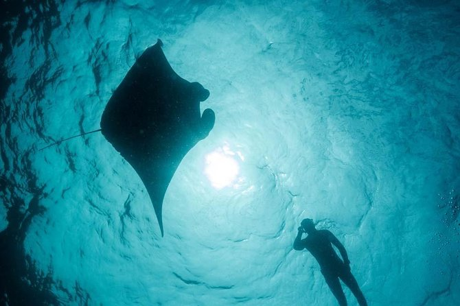 Introduction to Freediving