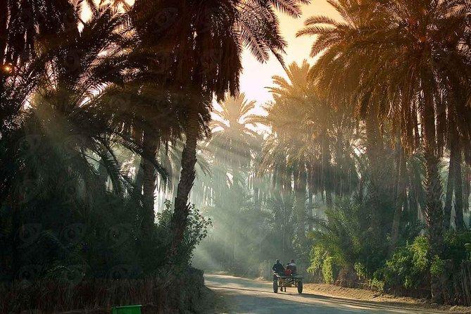 Tunisia: Full Country Trip 7 Days - 6 Nights (Multiligual Guide + Free SIM Card)